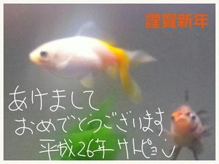 IMG_20140103_011900.jpg
