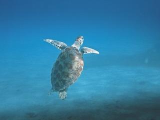 turtle-601286_640.jpg